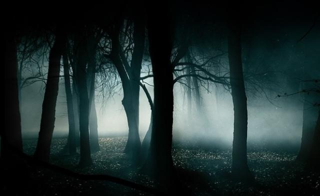 Reserva Florestal Forest-night