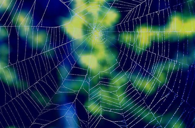 A web of lies, deceit and betrayal.